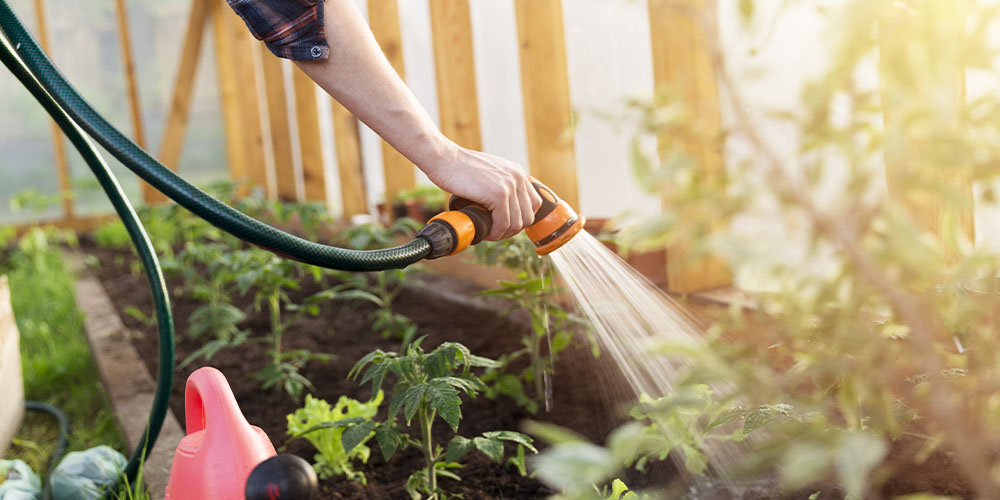 watering garden with hose