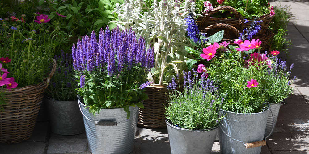 potted garden planters