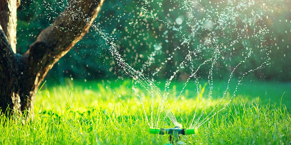 sprinkler watering grass and tree