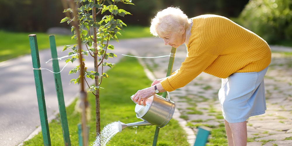 woman watering young tree
