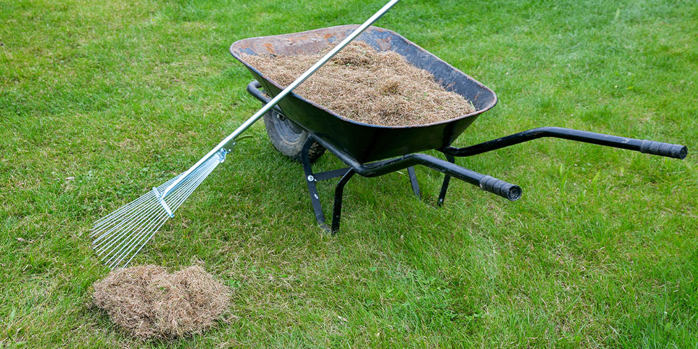 dethatching the lawn Wallace's Garden Center